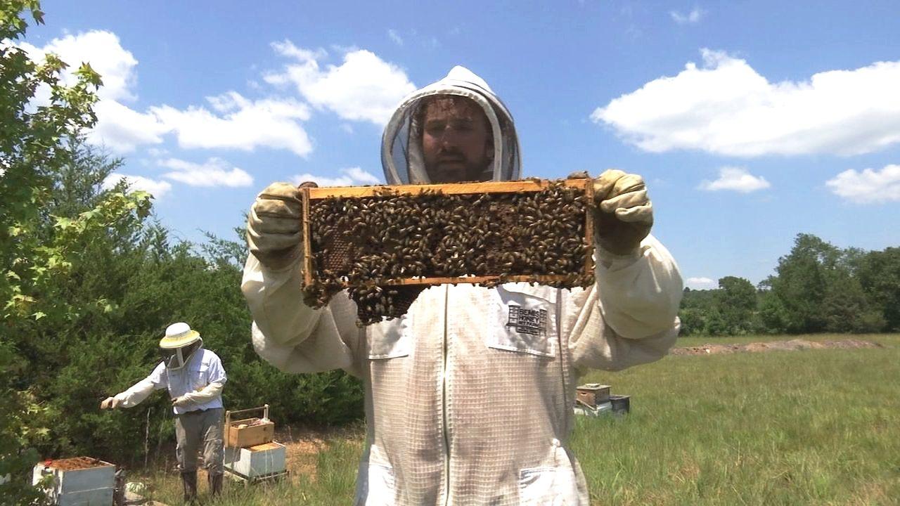 Exploring Arkansas October Ben Temple Beekeeping Greenbrier