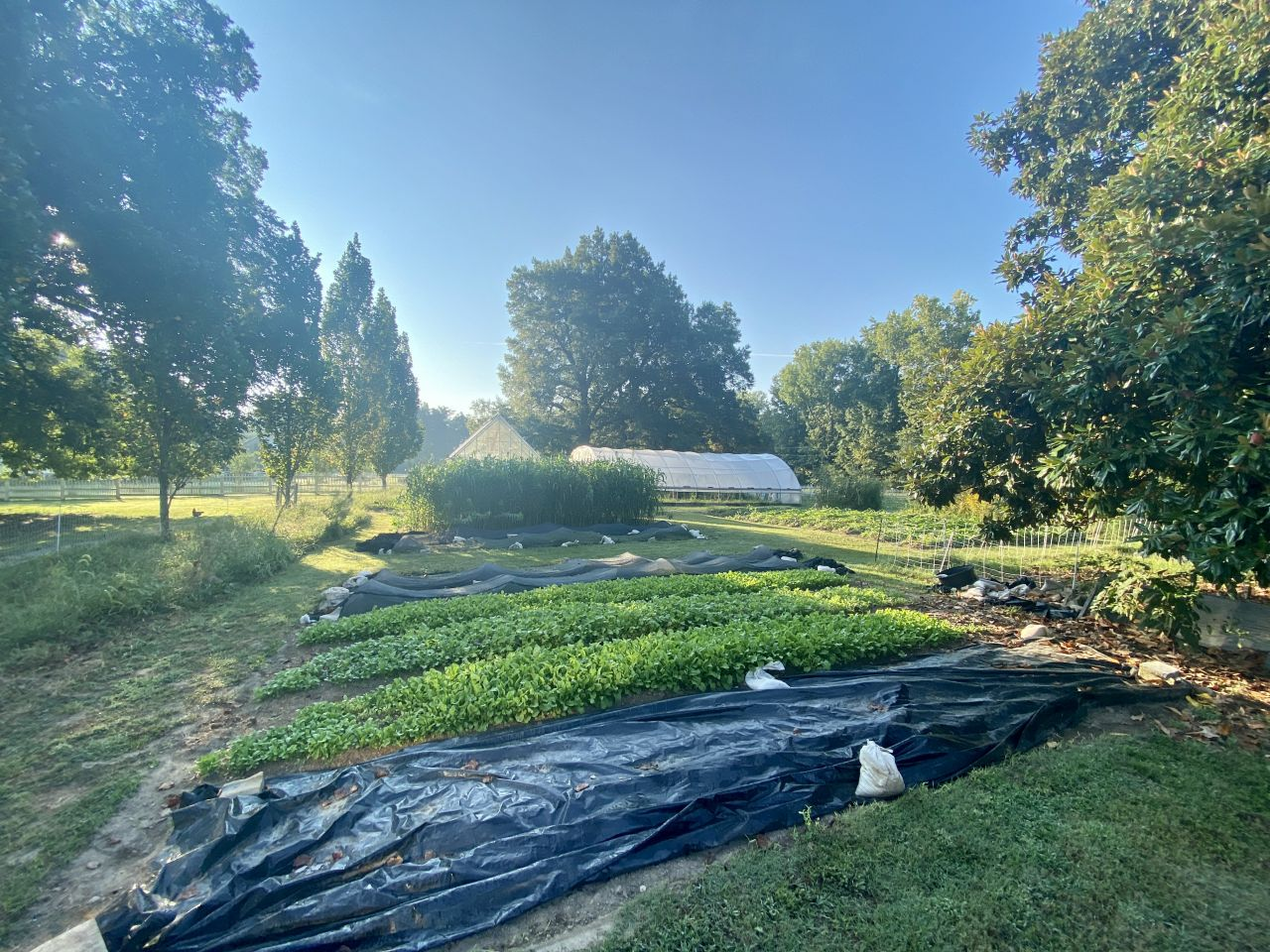 The sun rises over a wide view of the patches and hoophouse at Birdeye Farms