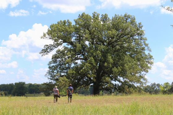 One of the hottest days last year was July 26, 2012. It was a scorching 103 degrees as Cinematographer Gabe Mayhan and AETN Producer Mark Wilcken ventured to the Arkansas State Veterans Cemetery in Birdeye, Arkansas to film the champion Southern Red Oak for the upcoming documentary on champion trees.