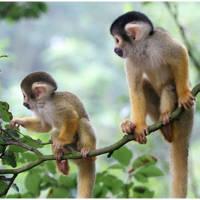 Monkeys in trees