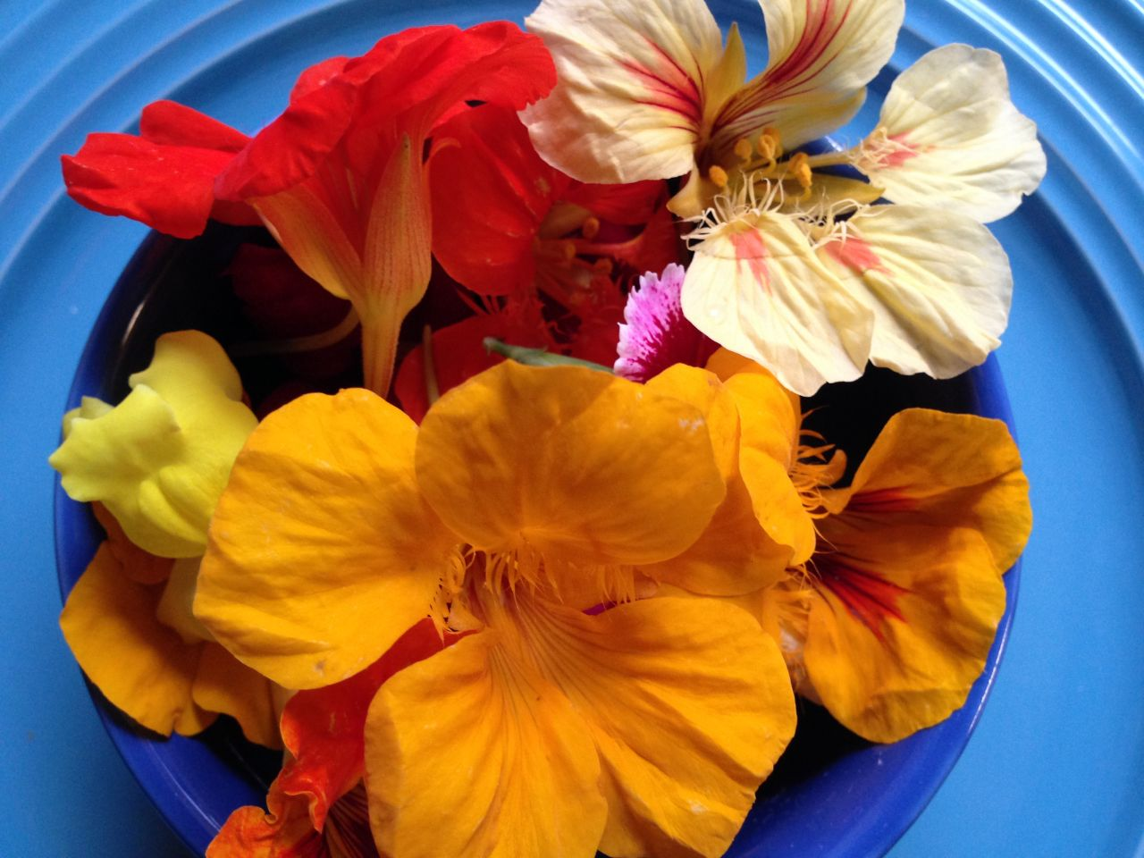 """Cook With Brooks Edible Flowers"""" /><figcaption class="""