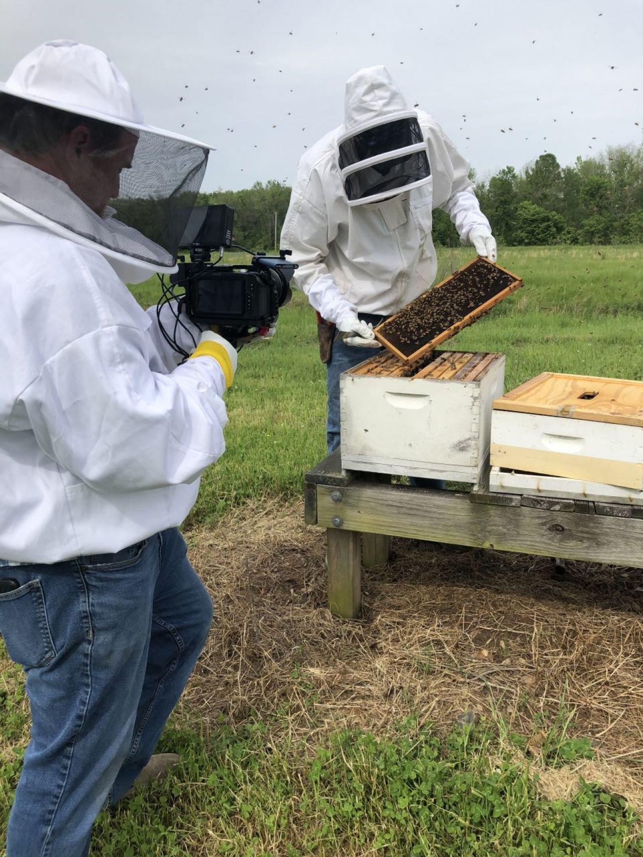 Bemis shows crew the interior of a bee hive