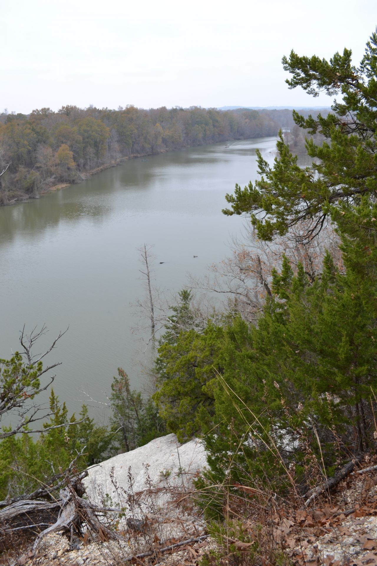 Exploring Arkansas The White Cliffs Natural Area
