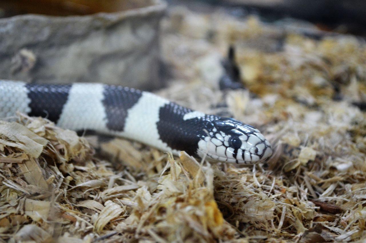 Exploring Arkansas Snake World