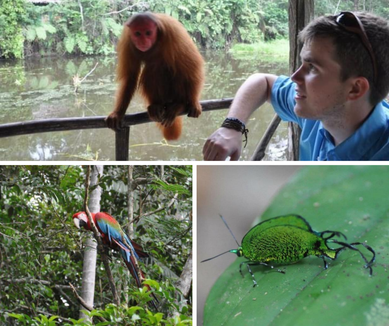 Amazon primates, insect and parrot