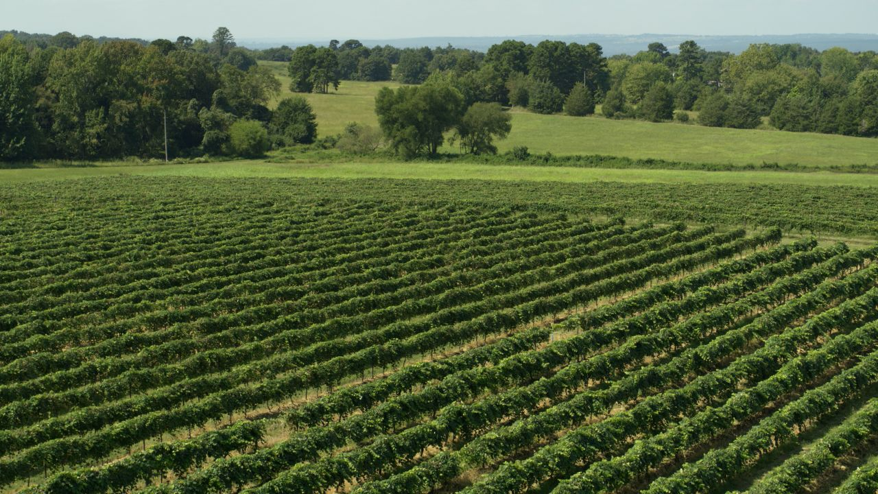 Aerial view of the viridescent rows of an Altus vineyard