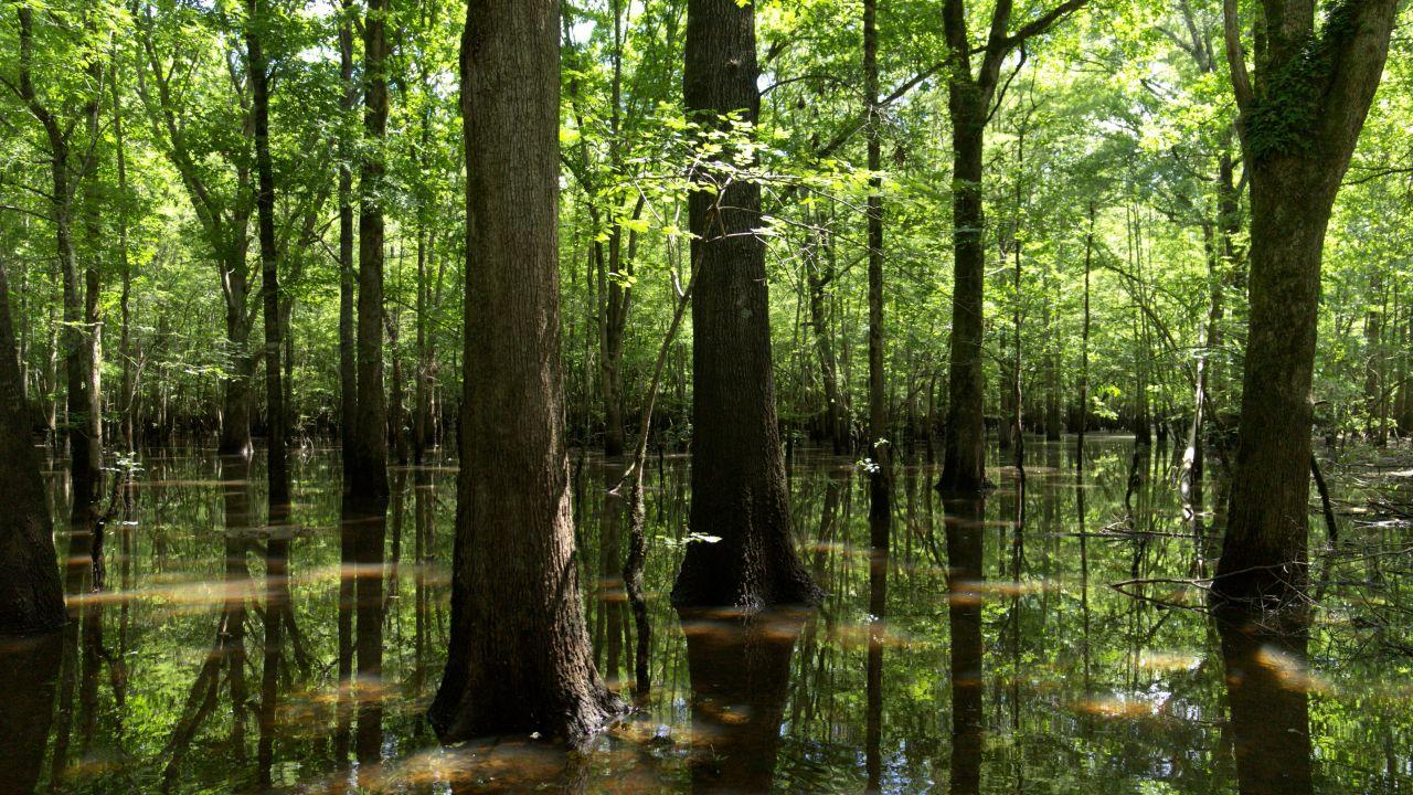 Wide view of verdant Seven Devils Swamp