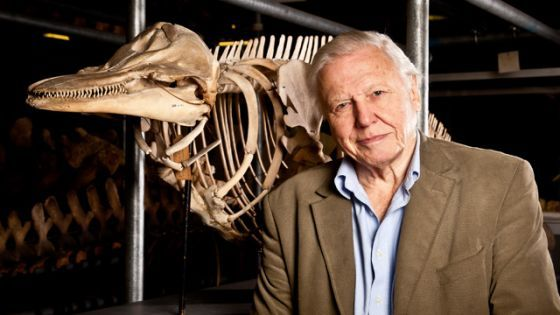 """Nature: Attenborough's Life Stories"""