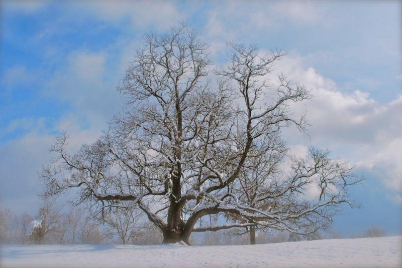 AETN Original Documentary Champion Trees Northern Catalpa
