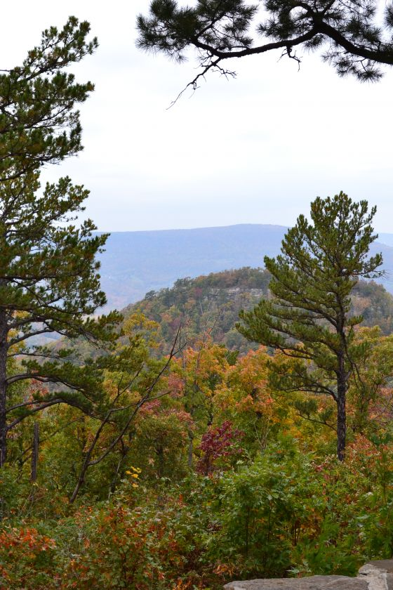 Scenic View from the Ozark Moonshine Run