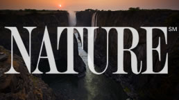 Title Graphic for Nature