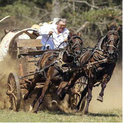 horse racing with buggy and driver