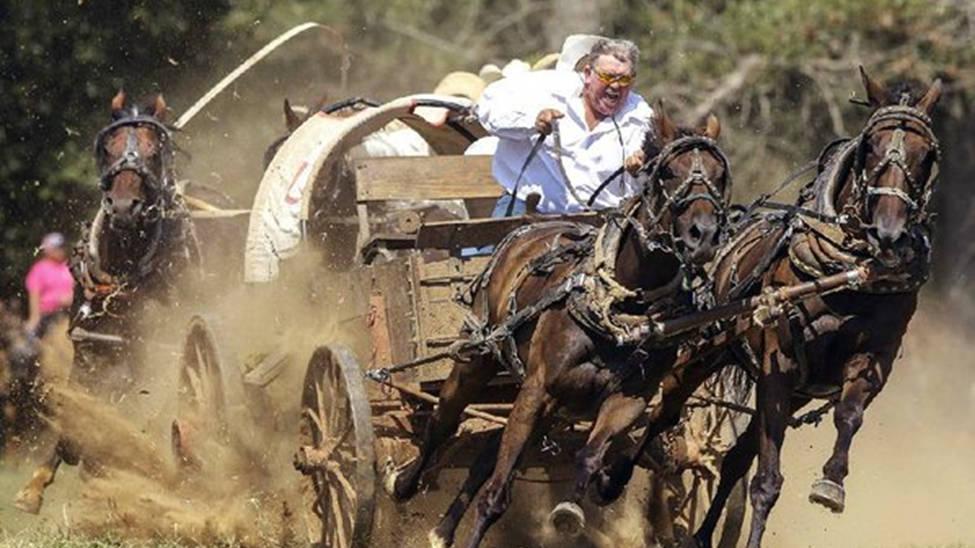 Chuckwagon and Horses Racing